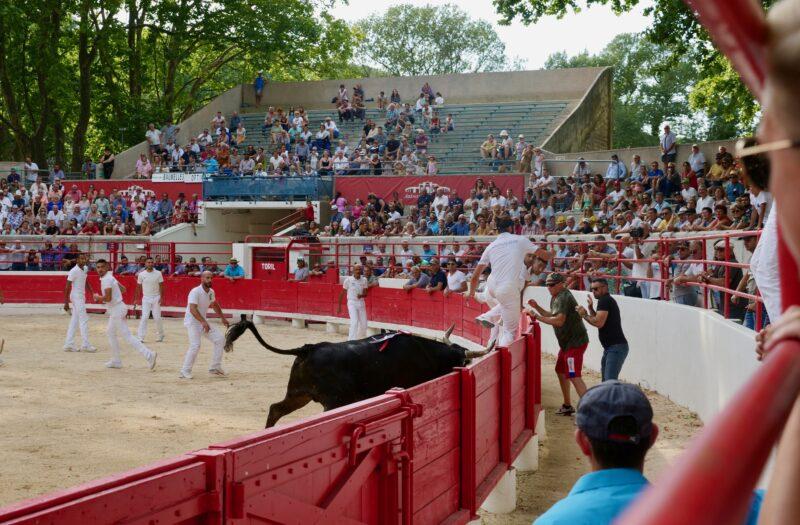 1634201233 884 BEAUCAIRE La Palme dOr for Vincent Marignan and a bonus