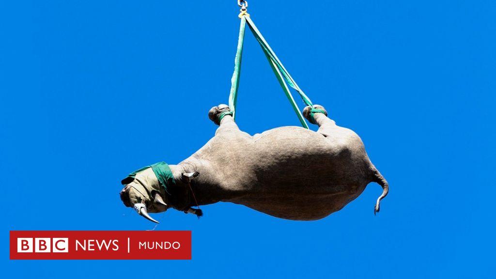 1634406872 Hanging rhinos and gum stuck to the floor Ig Nobel